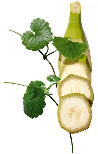 Organic Banana and Centella Asiatica plants
