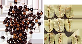 Extrait de guarana biologique et de caféine
