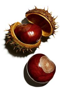 Indian horse chestnut escin