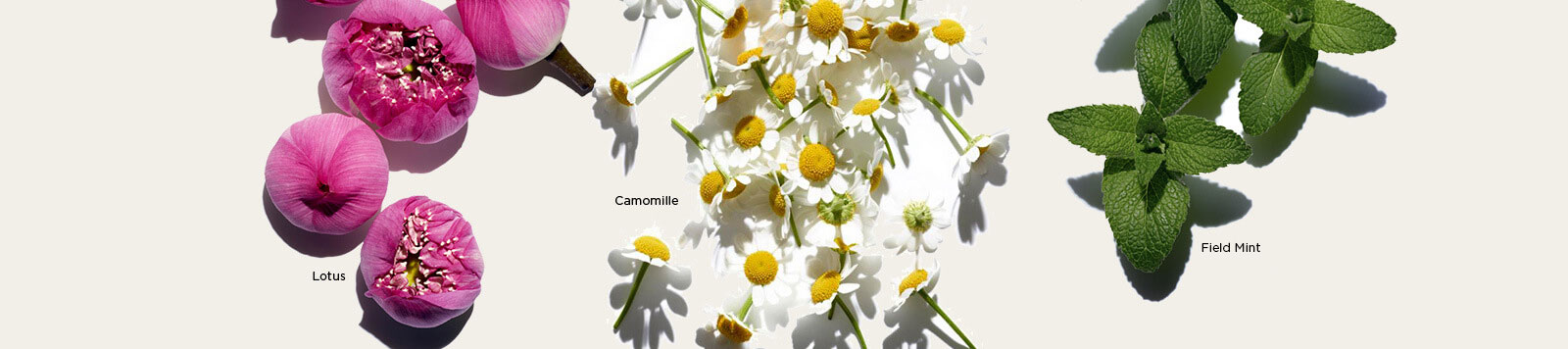 Images of Lotus, Camomile, and Field Mint ingredients